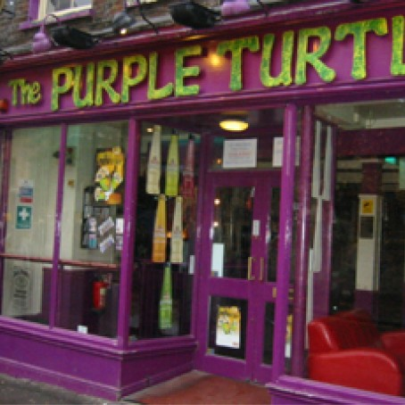 Purple.Turtle.FeaturedImage